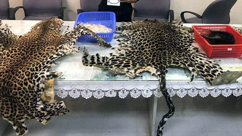 Vận chuyển, sản phẩm ,động vật , hoang dã, quý hiếm
